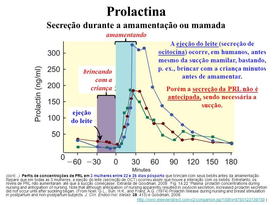 Prolactina Secreção durante a amamentação ou mamada amamentando