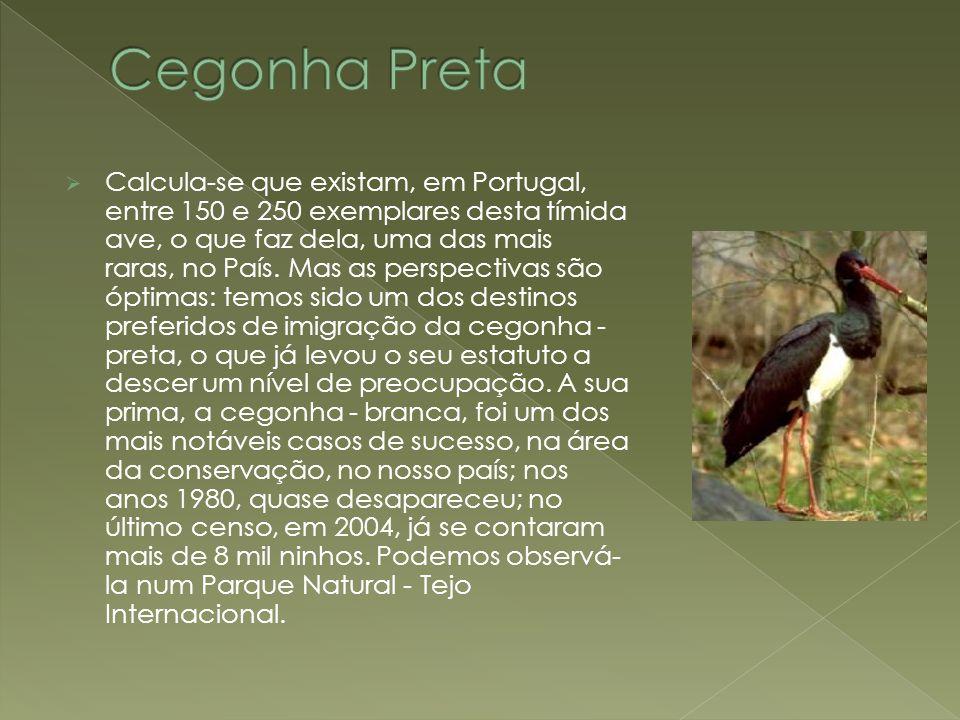 Cegonha Preta