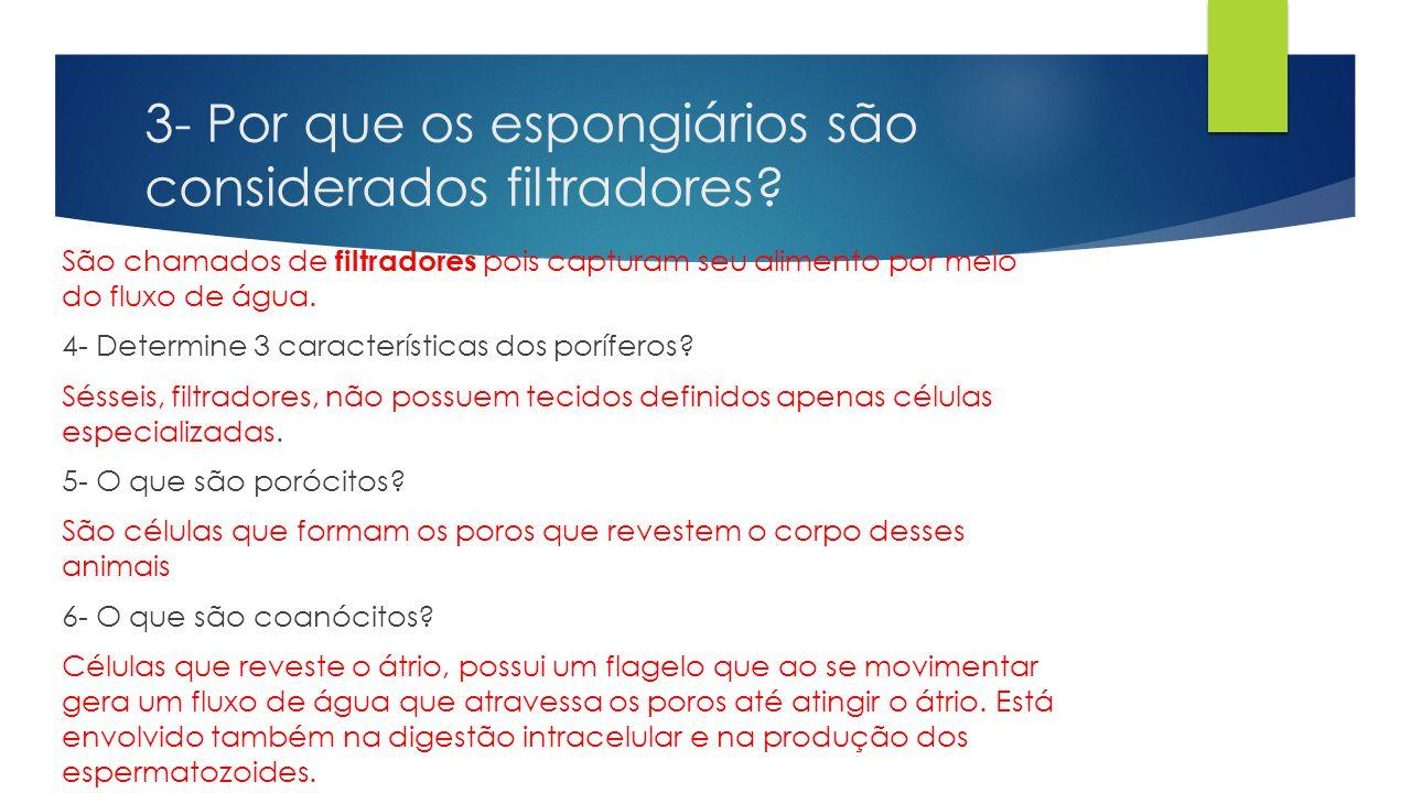 3- Por que os espongiários são considerados filtradores