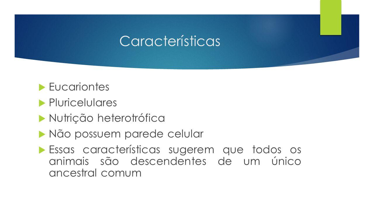 Características Eucariontes Pluricelulares Nutrição heterotrófica