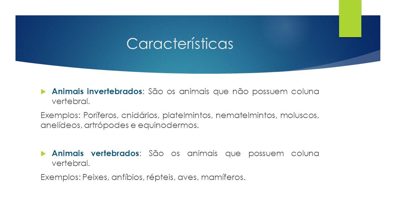 Características Animais invertebrados: São os animais que não possuem coluna vertebral.
