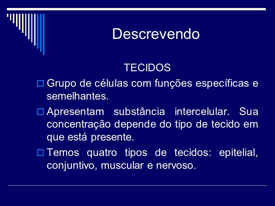 Descrevendo TECIDOS. Grupo de células com funções específicas e semelhantes.