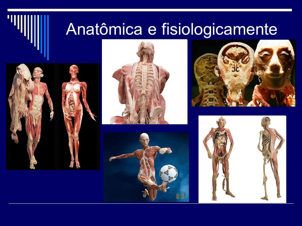 Anatômica e fisiologicamente