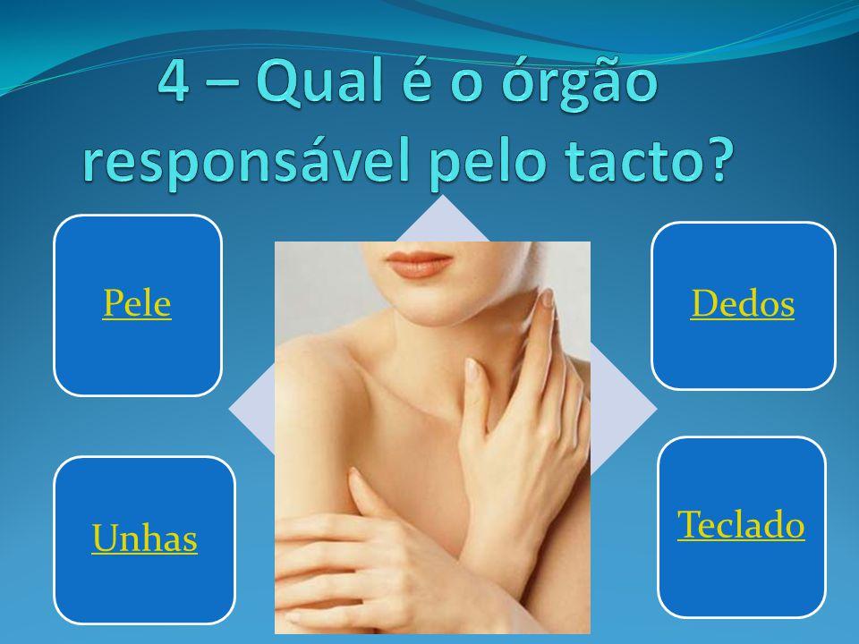 4 – Qual é o órgão responsável pelo tacto