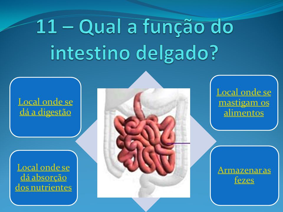 11 – Qual a função do intestino delgado