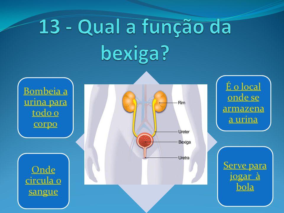 13 - Qual a função da bexiga