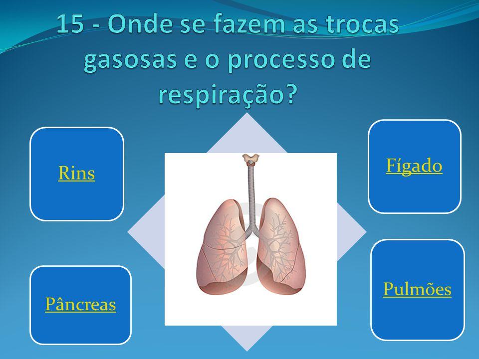 15 - Onde se fazem as trocas gasosas e o processo de respiração