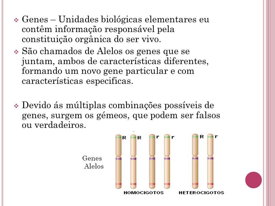 Genes – Unidades biológicas elementares eu contêm informação responsável pela constituição orgânica do ser vivo.