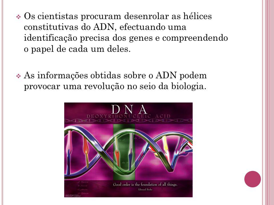 Os cientistas procuram desenrolar as hélices constitutivas do ADN, efectuando uma identificação precisa dos genes e compreendendo o papel de cada um deles.