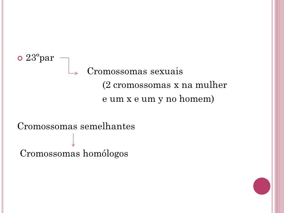 23ºpar Cromossomas sexuais. (2 cromossomas x na mulher. e um x e um y no homem) Cromossomas semelhantes.