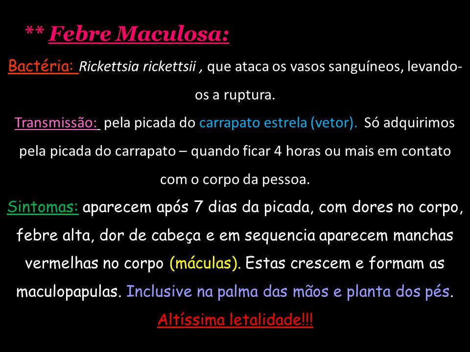 ** Febre Maculosa: Bactéria: Rickettsia rickettsii , que ataca os vasos sanguíneos, levando-os a ruptura.