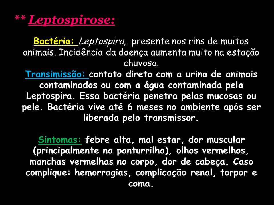 ** Leptospirose: Bactéria: Leptospira, presente nos rins de muitos animais. Incidência da doença aumenta muito na estação chuvosa.