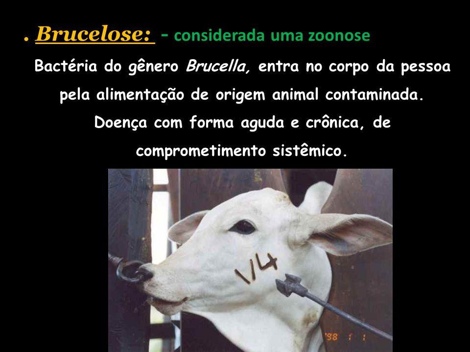. Brucelose: - considerada uma zoonose