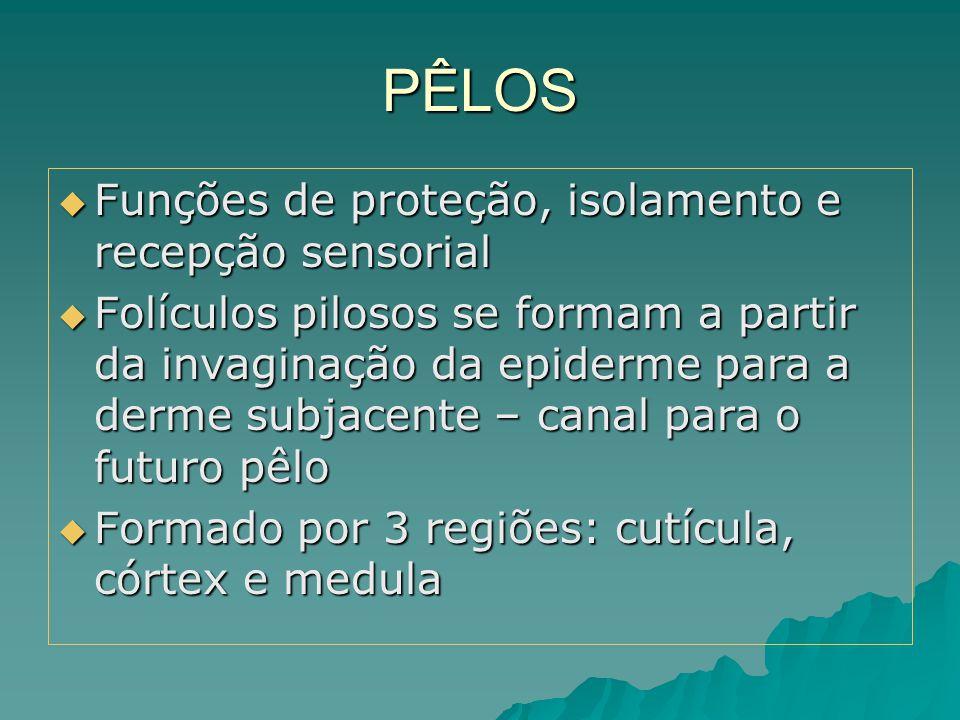 PÊLOS Funções de proteção, isolamento e recepção sensorial