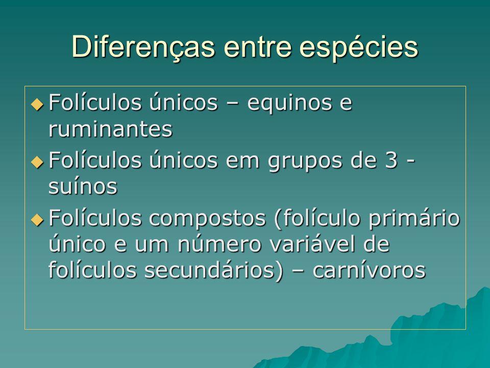 Diferenças entre espécies