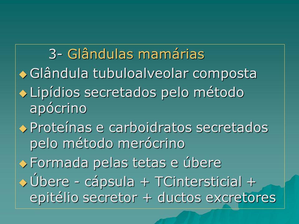 3- Glândulas mamárias Glândula tubuloalveolar composta. Lipídios secretados pelo método apócrino.