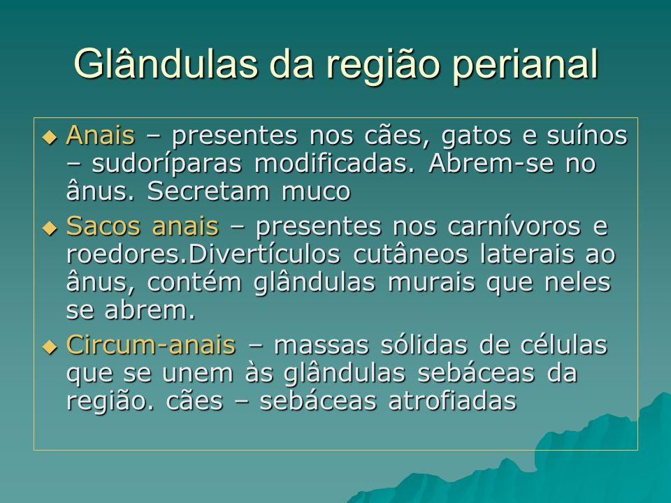 Glândulas da região perianal