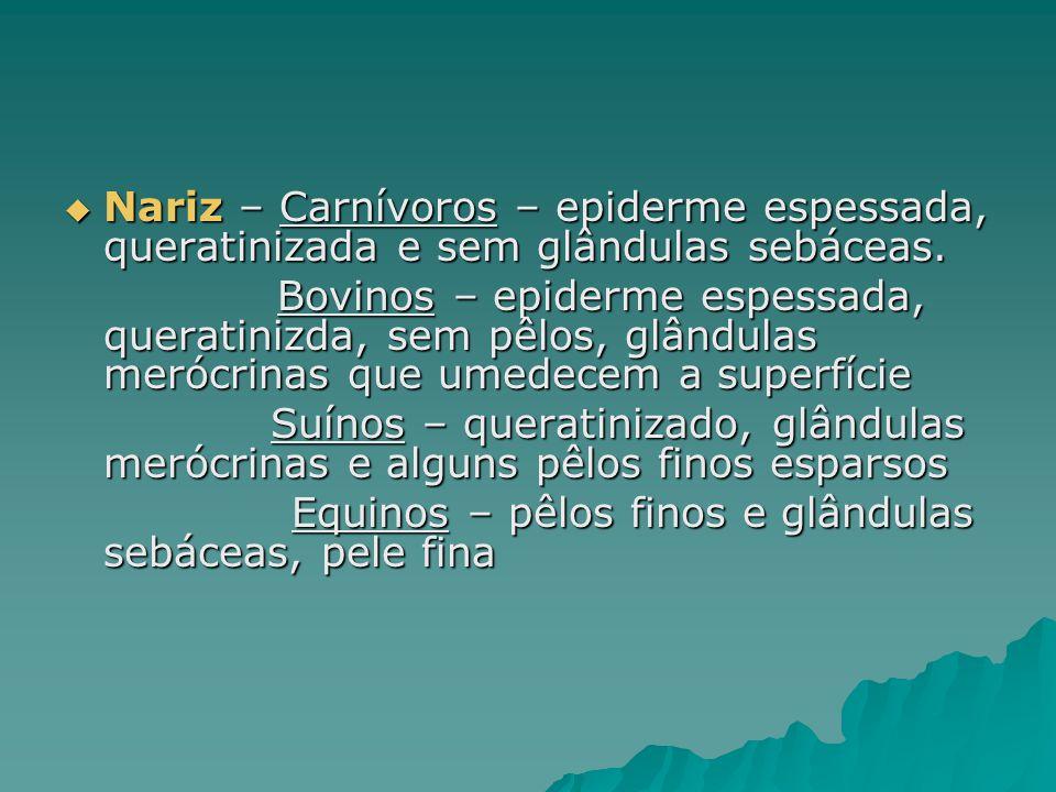 Nariz – Carnívoros – epiderme espessada, queratinizada e sem glândulas sebáceas.