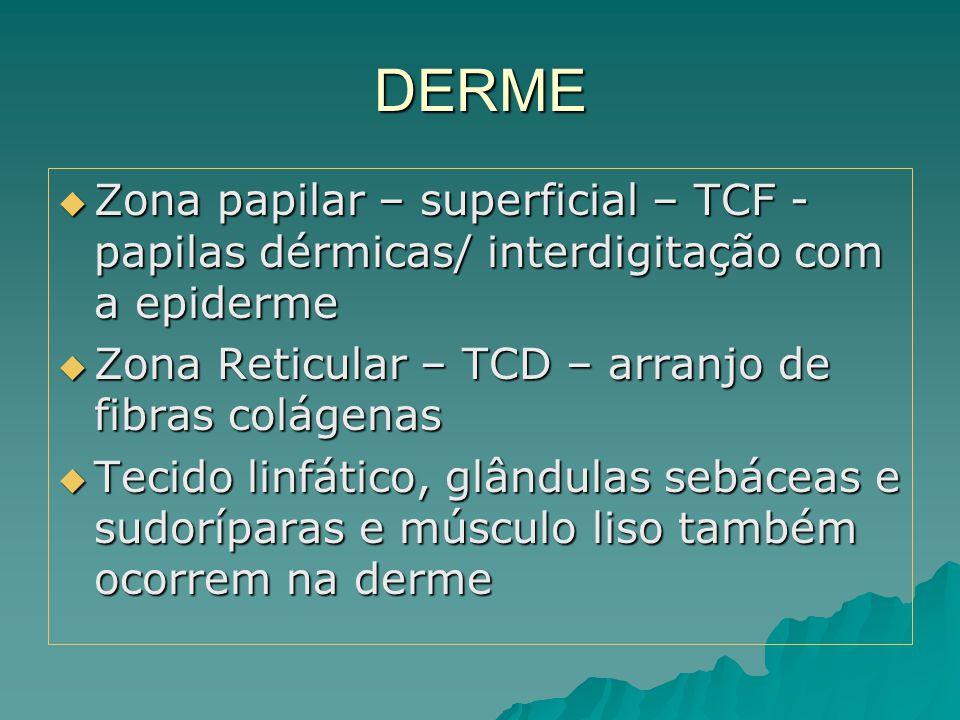 DERME Zona papilar – superficial – TCF - papilas dérmicas/ interdigitação com a epiderme. Zona Reticular – TCD – arranjo de fibras colágenas.