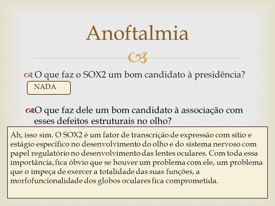 Anoftalmia O que faz o SOX2 um bom candidato à presidência