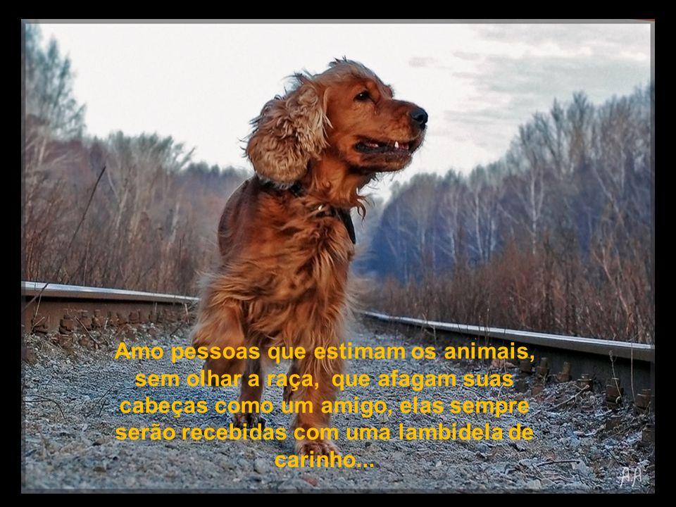 Amo pessoas que estimam os animais, sem olhar a raça, que afagam suas cabeças como um amigo, elas sempre serão recebidas com uma lambidela de carinho...