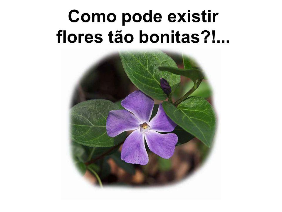 Como pode existir flores tão bonitas !...