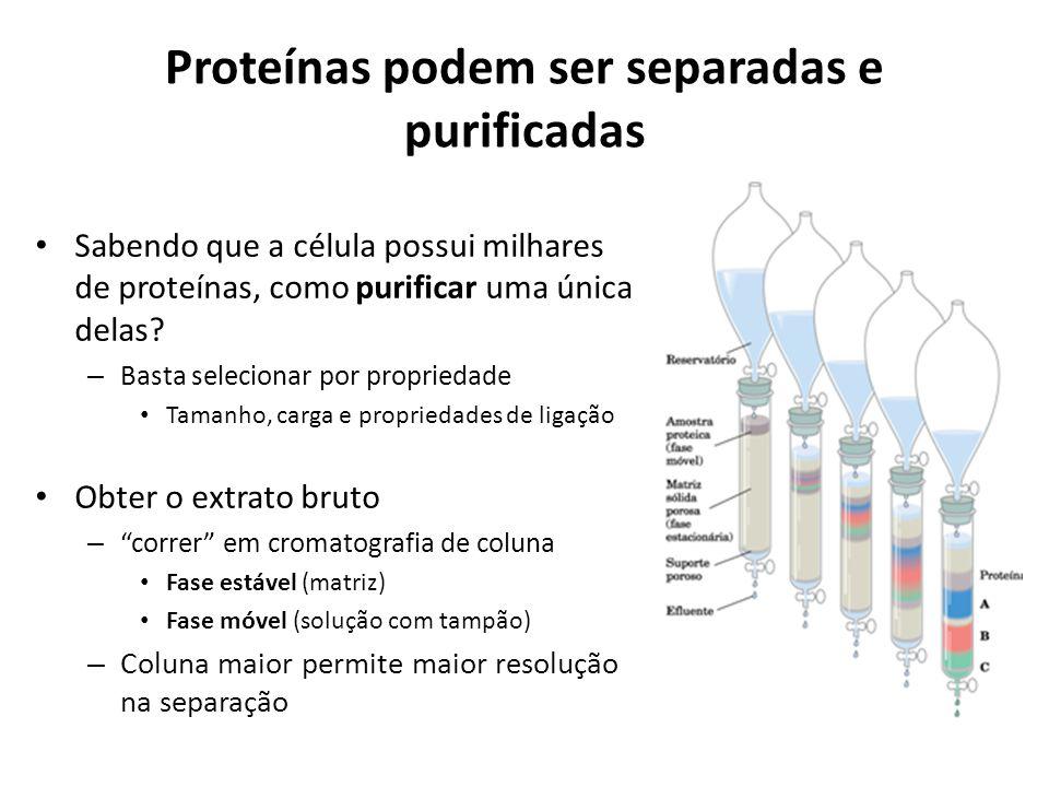 Proteínas podem ser separadas e purificadas