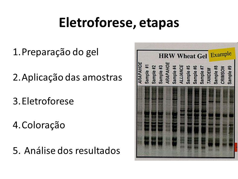 Eletroforese, etapas Preparação do gel Aplicação das amostras