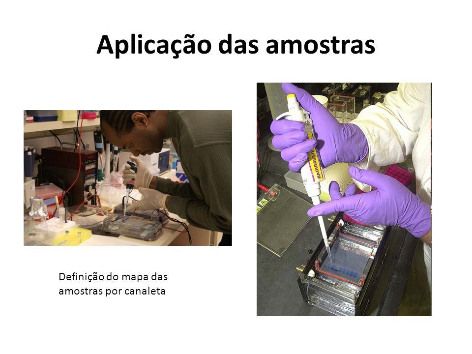 Aplicação das amostras
