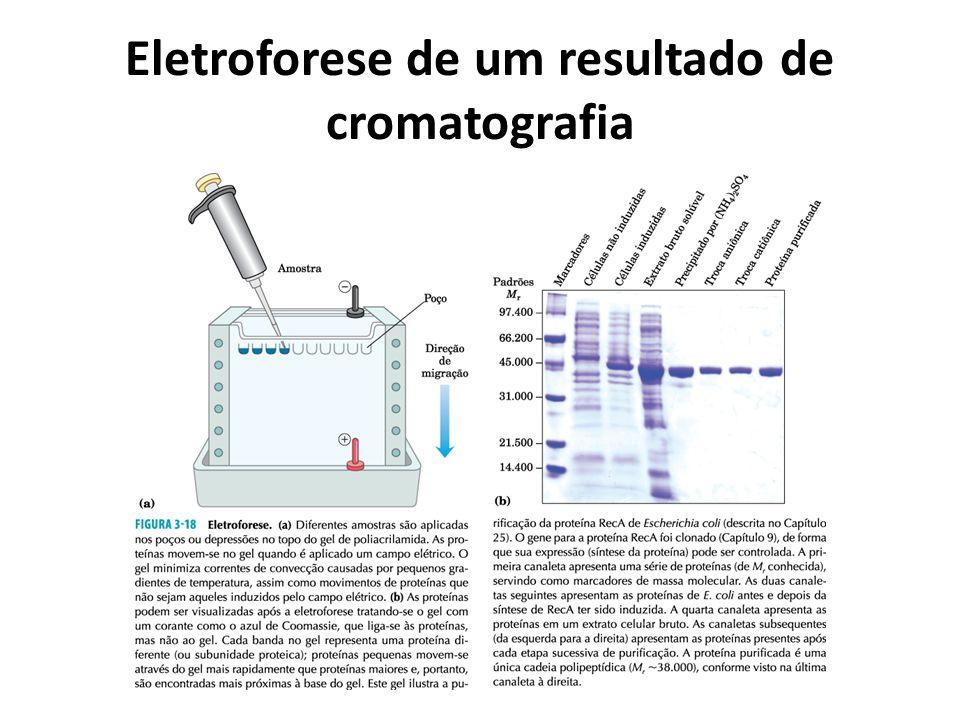 Eletroforese de um resultado de cromatografia