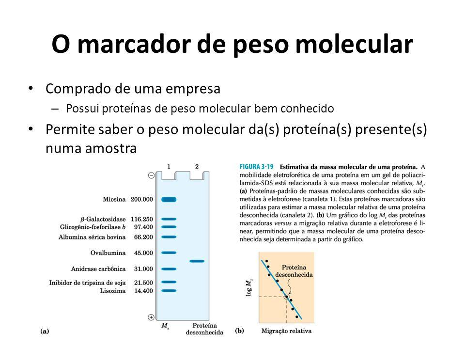 O marcador de peso molecular