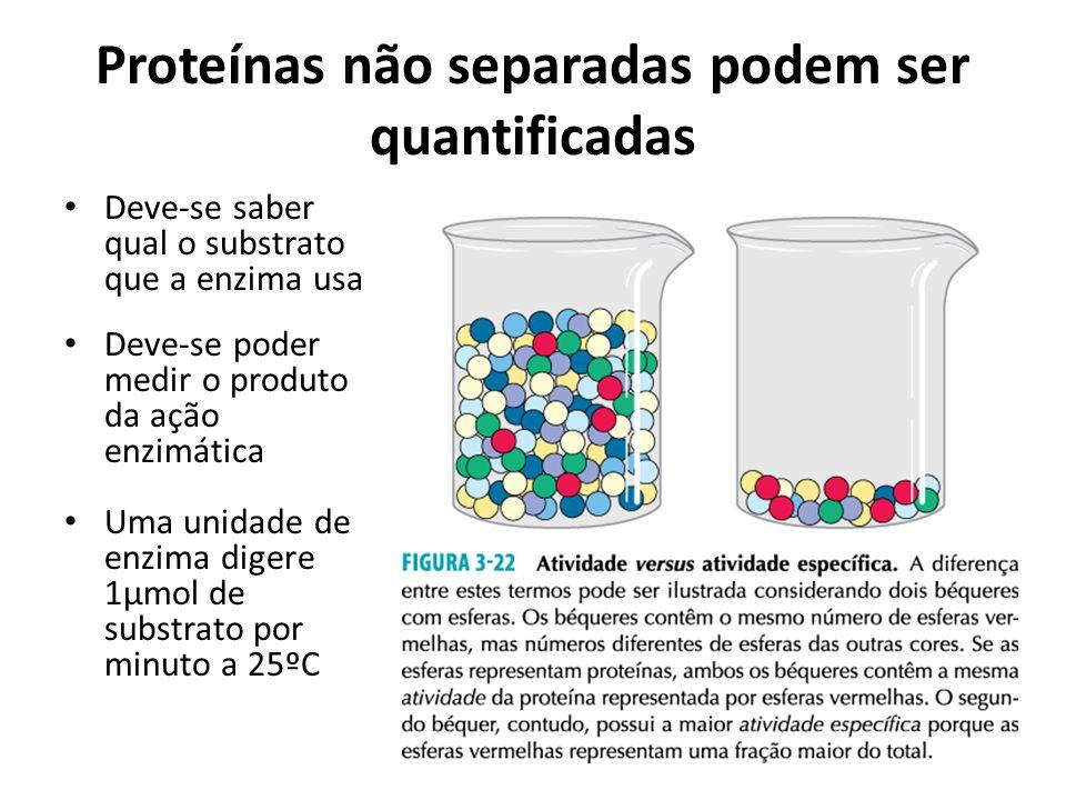 Proteínas não separadas podem ser quantificadas