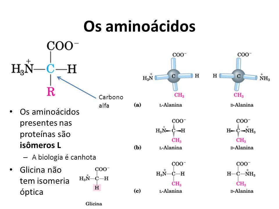 Os aminoácidos Os aminoácidos presentes nas proteínas são isômeros L