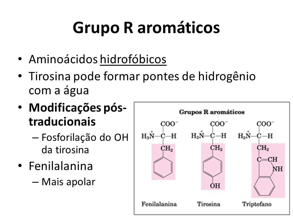 Grupo R aromáticos Aminoácidos hidrofóbicos