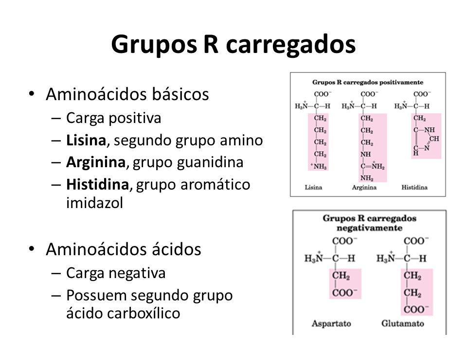 Grupos R carregados Aminoácidos básicos Aminoácidos ácidos