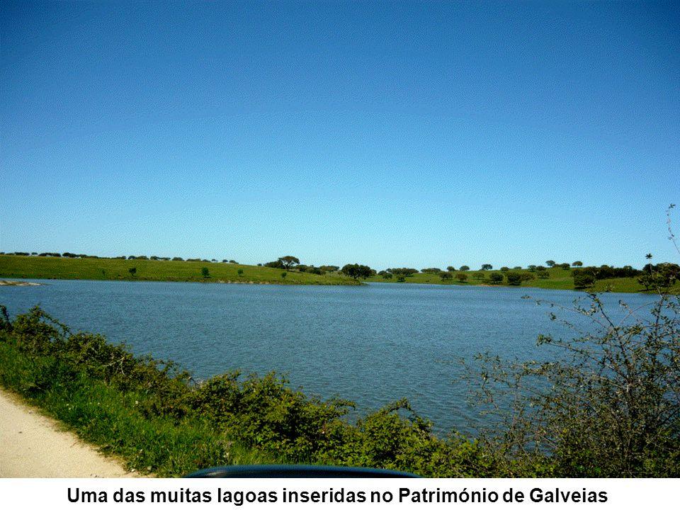 Uma das muitas lagoas inseridas no Património de Galveias