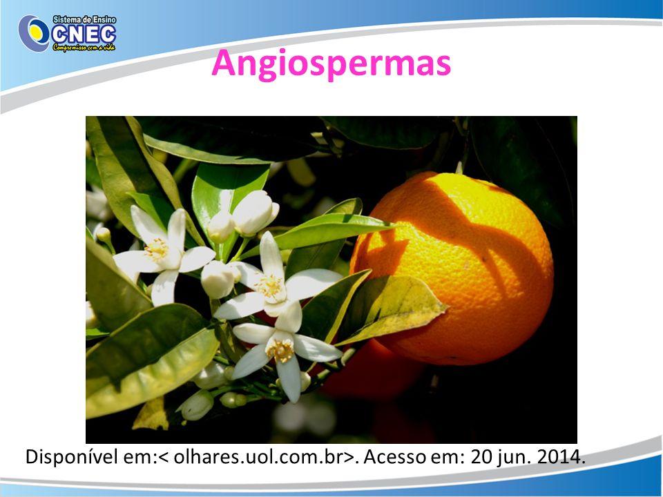 Angiospermas Disponível em:< olhares.uol.com.br>. Acesso em: 20 jun. 2014.