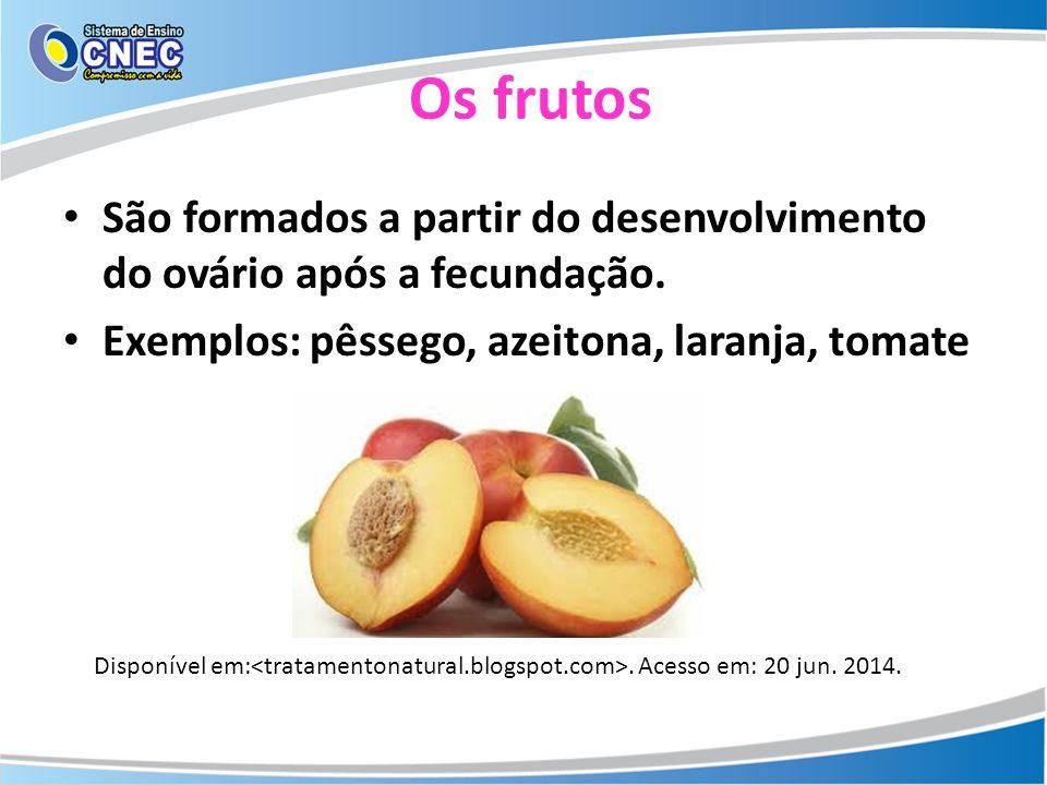 Os frutos São formados a partir do desenvolvimento do ovário após a fecundação. Exemplos: pêssego, azeitona, laranja, tomate.