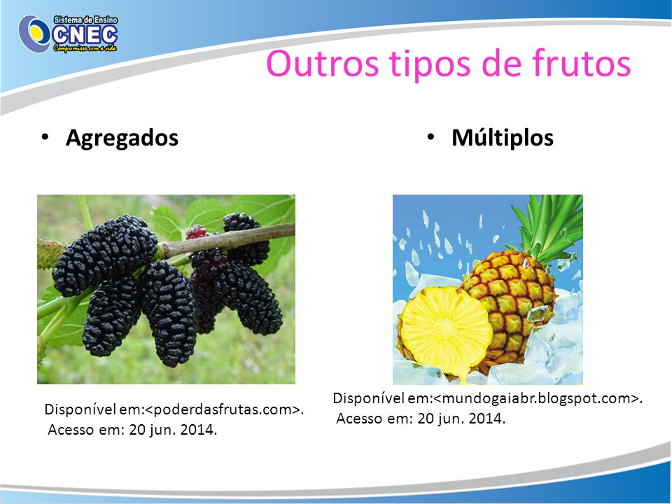 Outros tipos de frutos Agregados Múltiplos