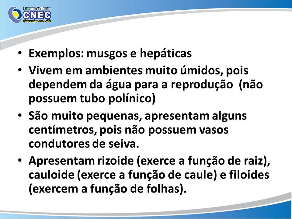 Exemplos: musgos e hepáticas