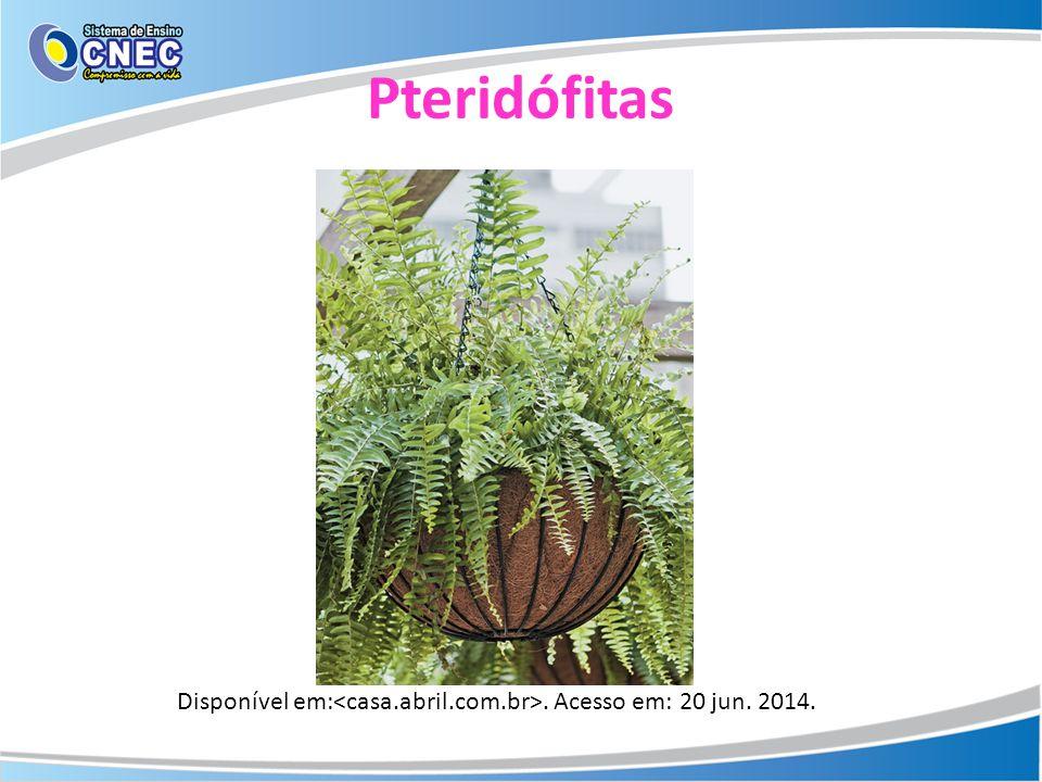 Pteridófitas Disponível em:<casa.abril.com.br>. Acesso em: 20 jun. 2014.