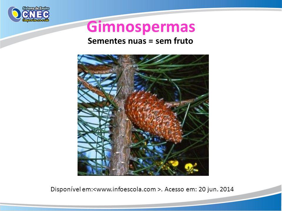 Gimnospermas Sementes nuas = sem fruto