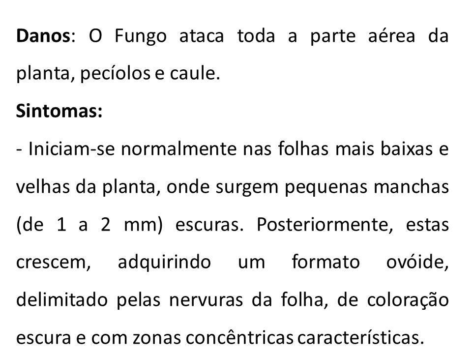 Danos: O Fungo ataca toda a parte aérea da planta, pecíolos e caule.