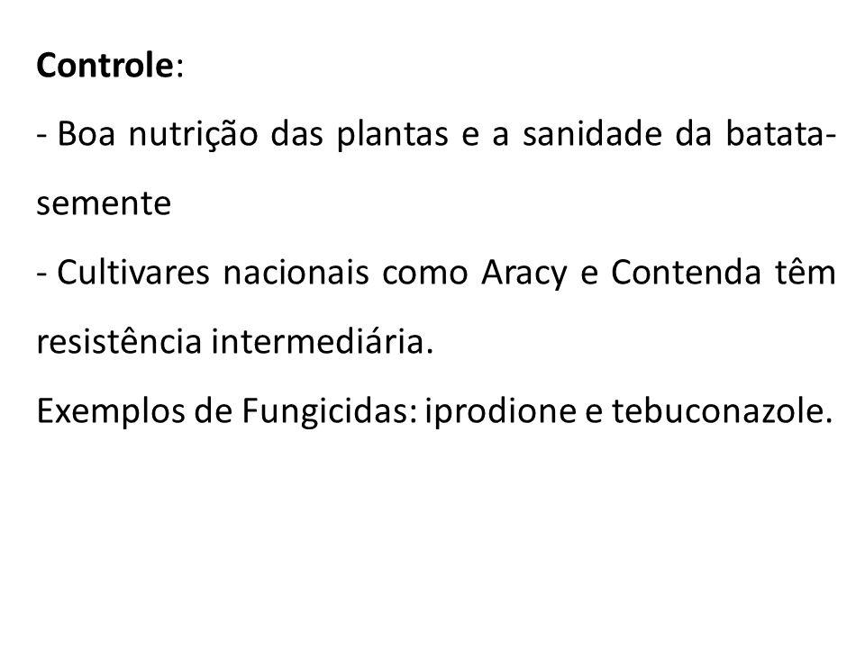 Controle: Boa nutrição das plantas e a sanidade da batata-semente. Cultivares nacionais como Aracy e Contenda têm resistência intermediária.