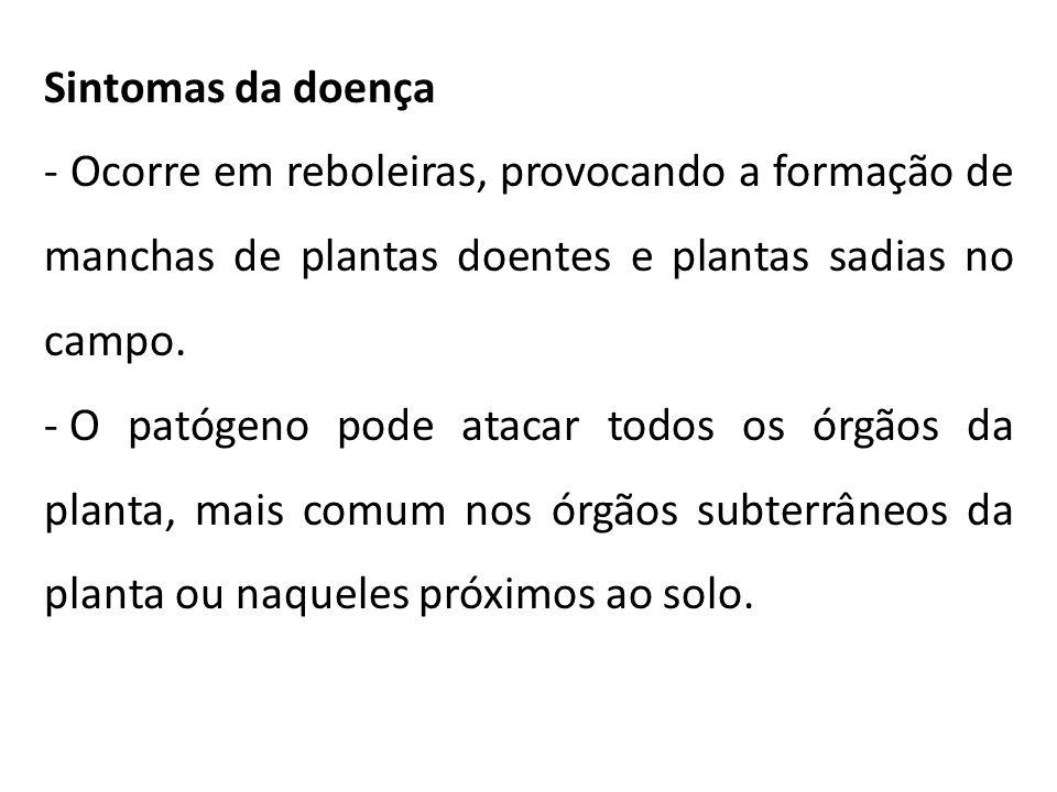 Sintomas da doença - Ocorre em reboleiras, provocando a formação de manchas de plantas doentes e plantas sadias no campo.