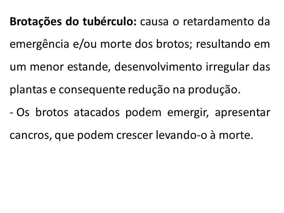 Brotações do tubérculo: causa o retardamento da emergência e/ou morte dos brotos; resultando em um menor estande, desenvolvimento irregular das plantas e consequente redução na produção.