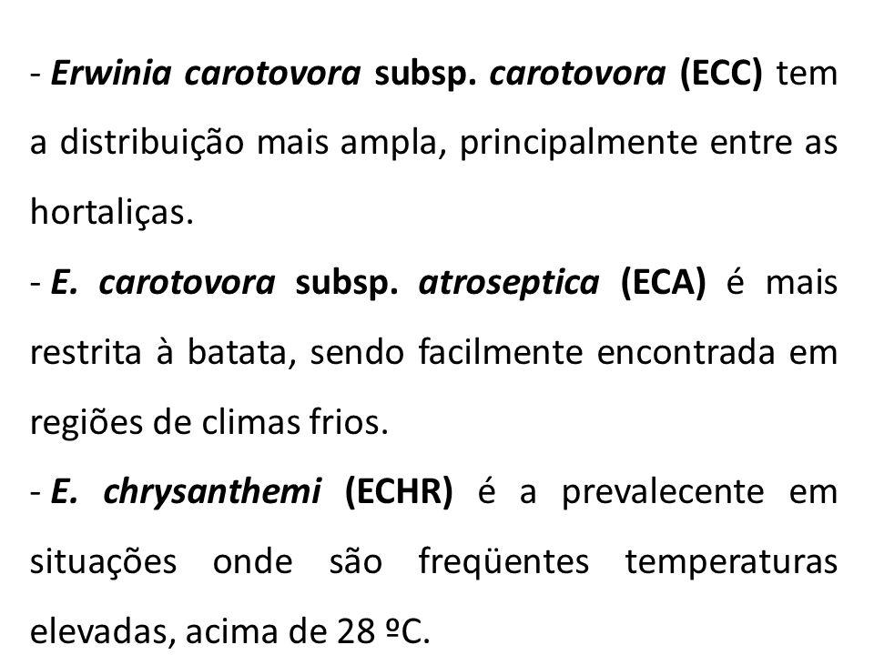 Erwinia carotovora subsp