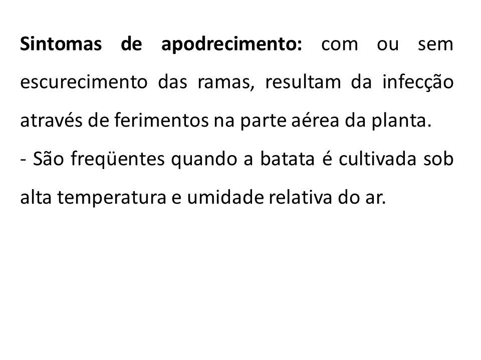 Sintomas de apodrecimento: com ou sem escurecimento das ramas, resultam da infecção através de ferimentos na parte aérea da planta.