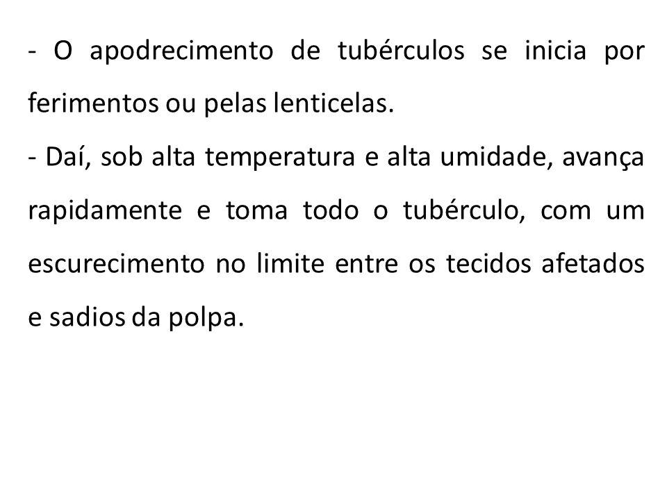 - O apodrecimento de tubérculos se inicia por ferimentos ou pelas lenticelas.