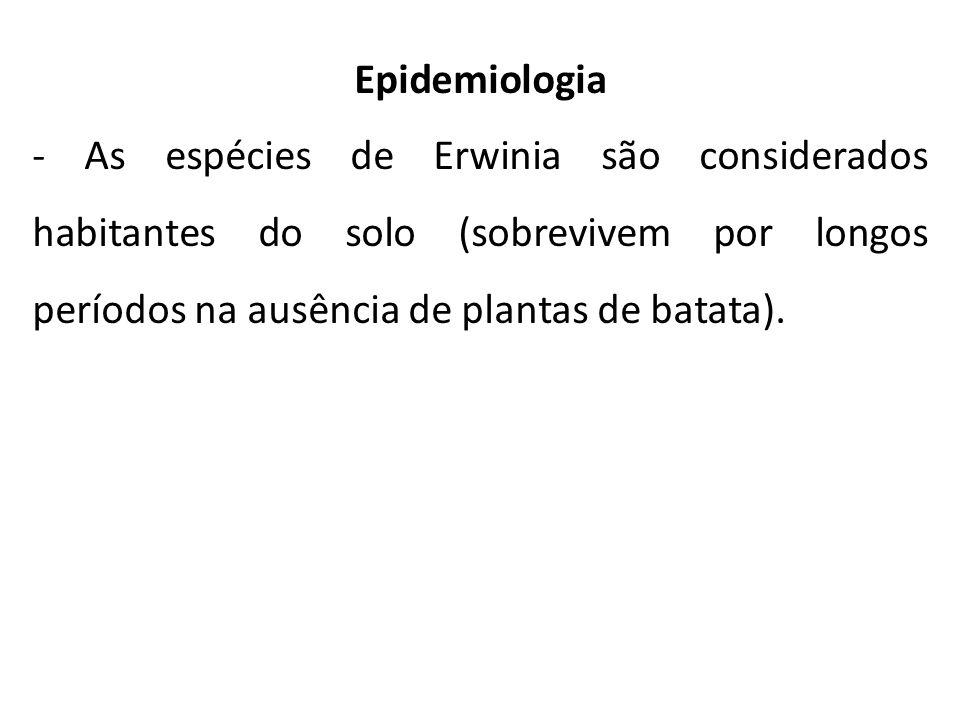 Epidemiologia - As espécies de Erwinia são considerados habitantes do solo (sobrevivem por longos períodos na ausência de plantas de batata).